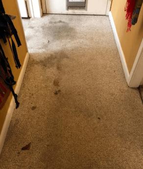 Hoover Power Scrub Elite Pet Carpet Cleaner, FH50251 performance - before